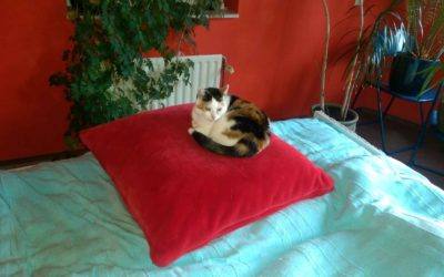 Actie sterilisatie/castratie katten